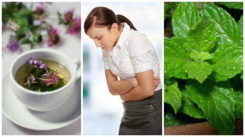 5 lindrende urter mot irritabel tarm-syndrom