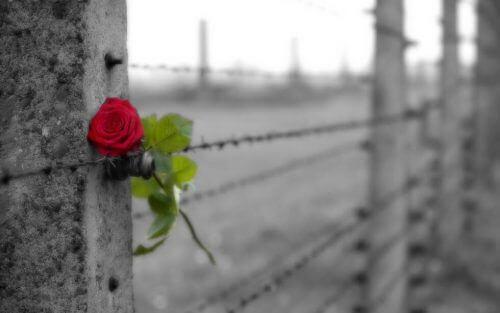 Forskjellen mellom kjærlighet og besettelse