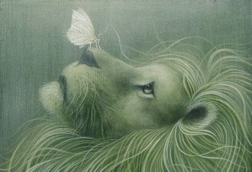 Løve med sommerfugl på snuten