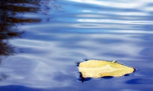 blad flyter pa vann