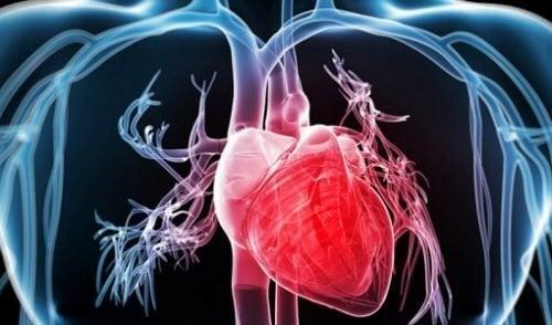 fordeler brokkoli har for helsen din hjerte