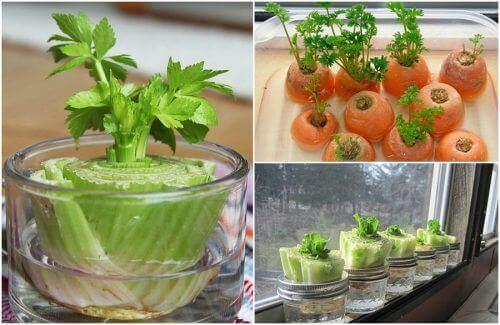 5 grønnsaker det er enkelt å få til å vokse igjen