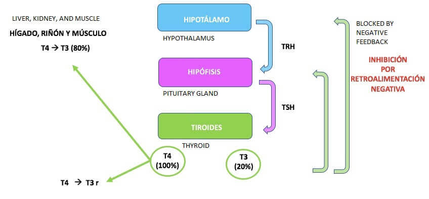 hypotyreose
