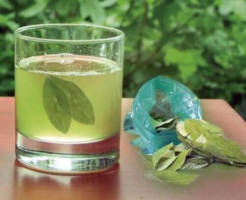 Te av avokadoblader for å bli kvitt nyrestein