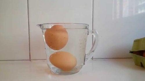 Egg i vann
