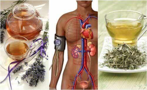 Drikk disse fem urteteene for å senke blodtrykket