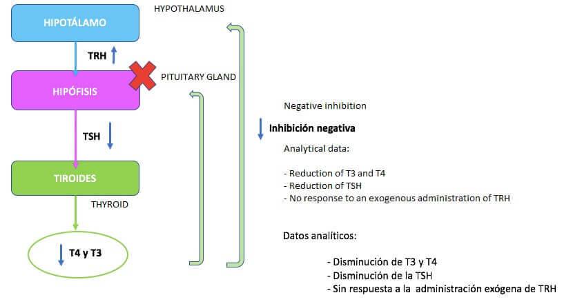 Sekundær hypotyreose