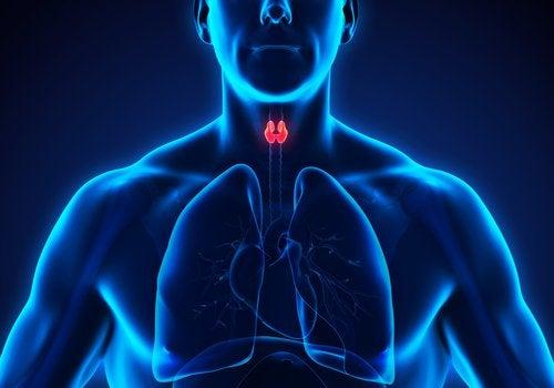 Hva er hypotyreose?