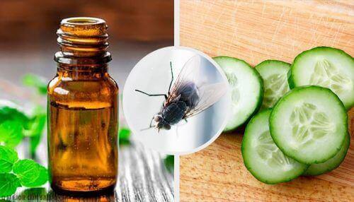 Hold fluene i sjakk med disse 7 naturlige insektmidlene