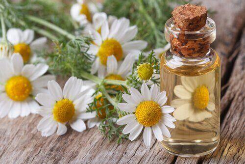 Kamilleolje med medisinske egenskaper