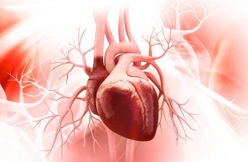 Linser forbedrer kardiovaskulær helse