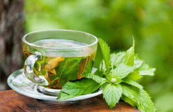 Te av mynte og boldo for å behandle fettleversykdom