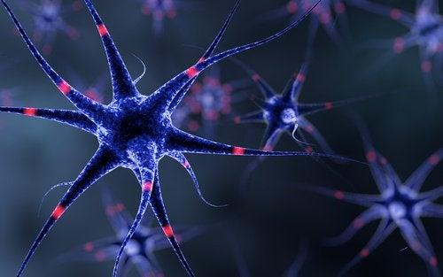 Linser beskytter nervesystemet