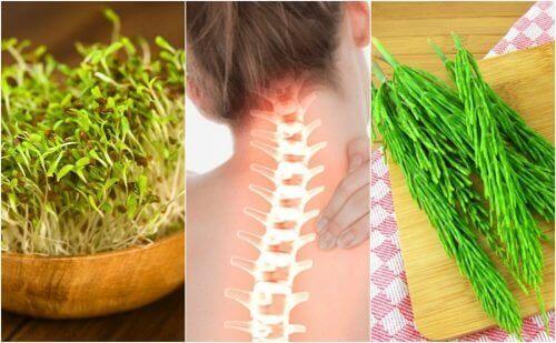 7 medisinske planter som forbedrer beinhelsen