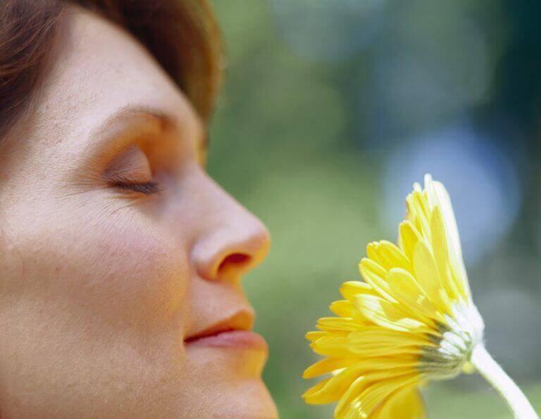 Å ha en plante hjemme vil gjøre deg glad