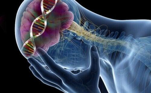 9 overraskende effekter av lave serotoninnivåer