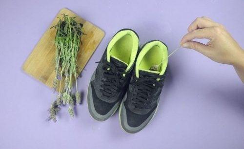 Forhindre stinkende sko med lavendel