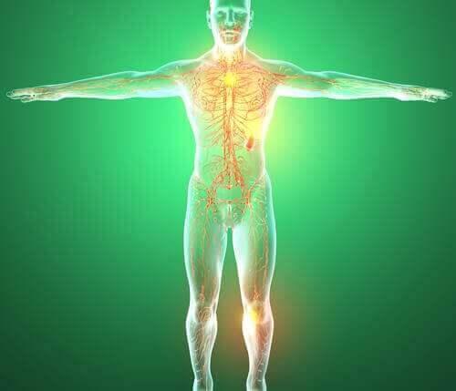 Lymfesystemet