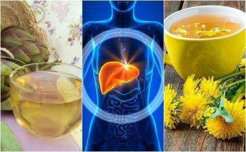5 urteremedier for å bekjempe fettlever naturlig