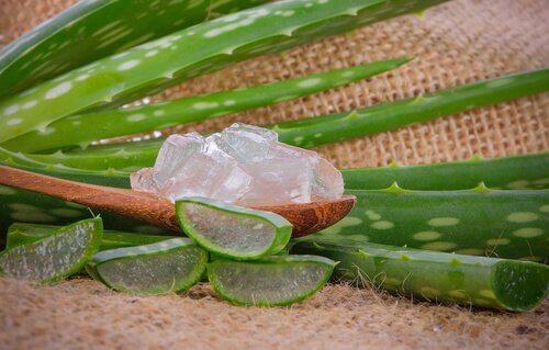 Betent tannkjøtt kan behandles med aloe vera