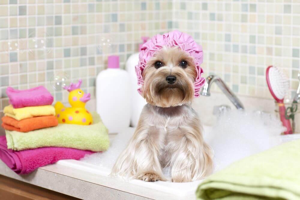 Hund med dusjhette