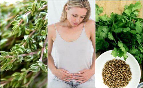 6 karminative urter for å bli kvitt luft i magen