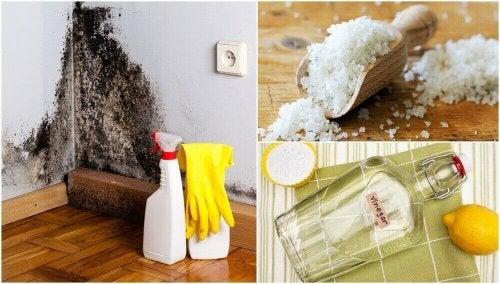 5 effektive alternativer for å fjerne fuktighet i hjemmet ditt