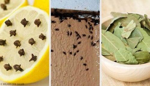 Bli kvitt irriterende insekter ved hjelp av naturlige ingredienser