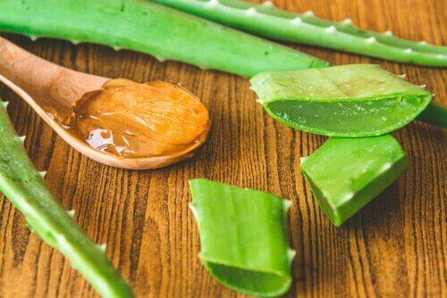Aloe vera for å revitalisere huden