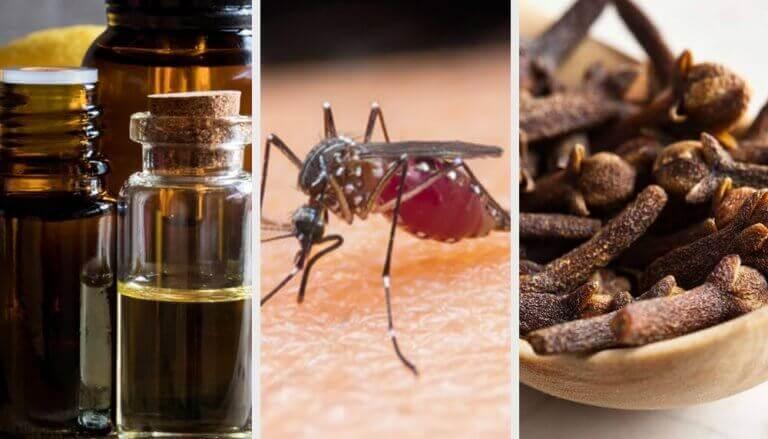 9 aromaer for å bekjempe mygg