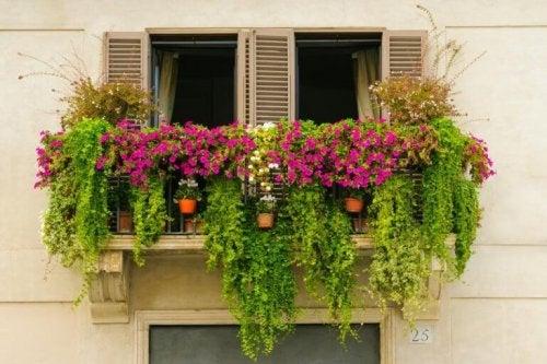 Små urbane hager som bringer harmoni til balkongen din