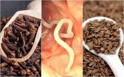 Lær å fjerne parasitter fra kroppen med nellik og linfrø