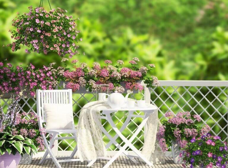 Fem vakre typer blomster til balkongen