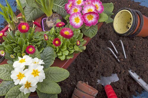 Lettstelte planter til hagen - 10 eksempler