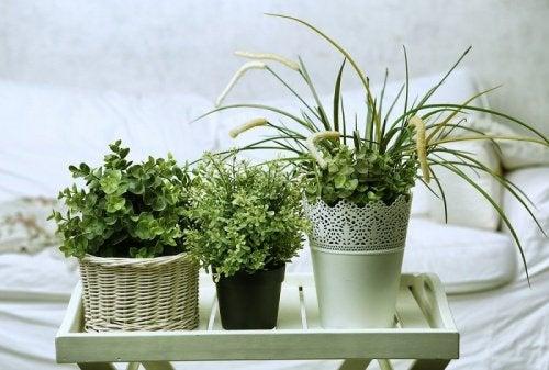 Planter på soverommet