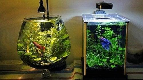 Den beste måten å rengjøre et akvarium på