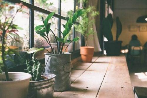Planteholdere i vinduet