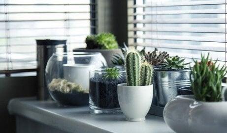 Fem forskjellige ideer til å plante en kaktus