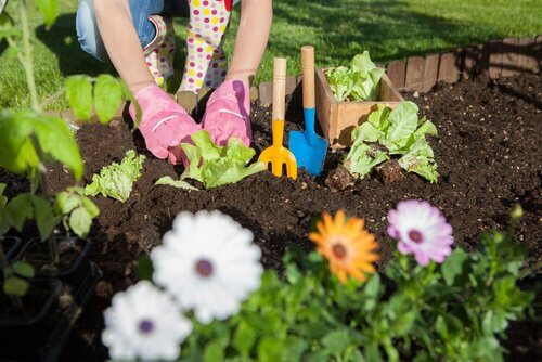 7 måter å bruke eddik på i plante- og hagestell