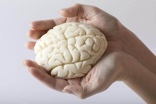 De 5 beste øvelsene for å forbedre hukommelsen