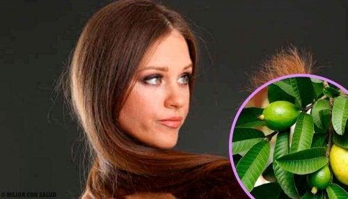Guavablader for slitt hår
