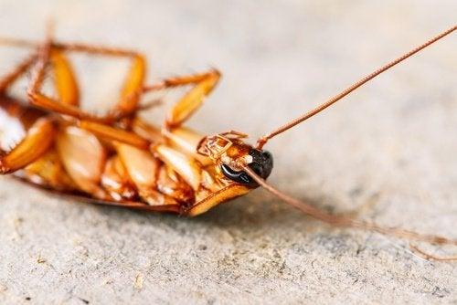 Kakerlakk på ryggen