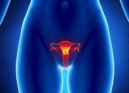 Kvinnelig kjønnsorgan