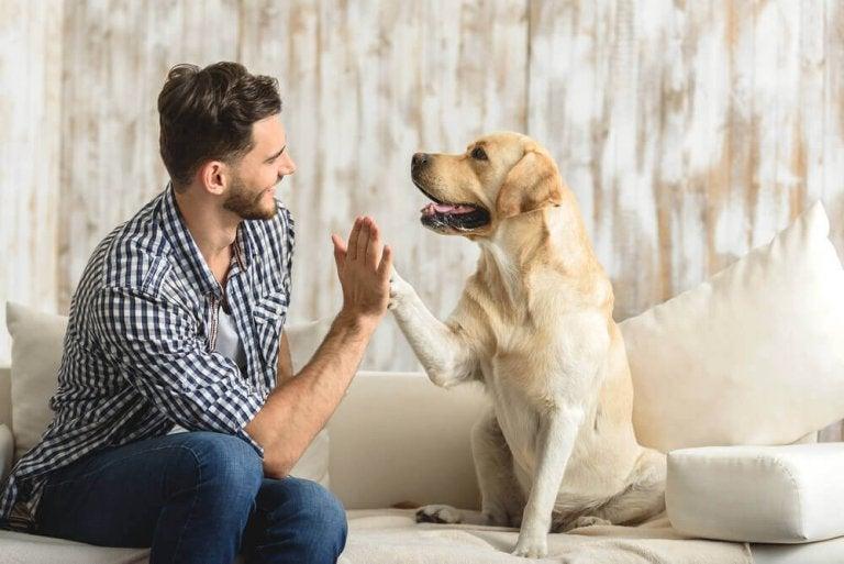 Fordeler med å ha et kjæledyr hjemme