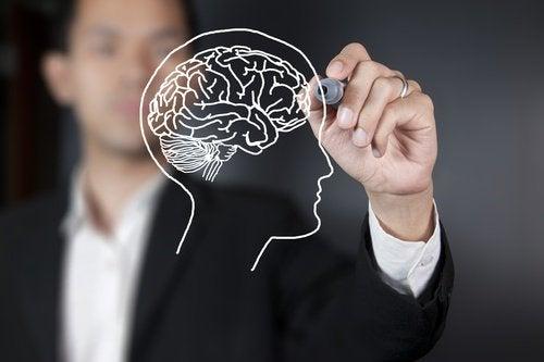 Det er oppdaget at et hjerneområde ikke modnes før vi er 36 år