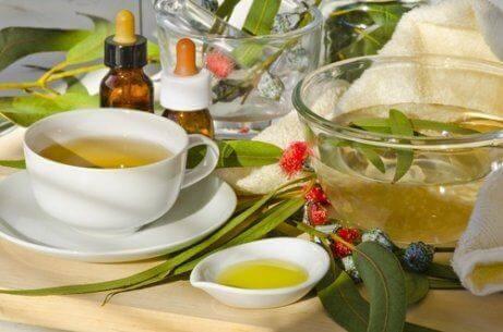 Eukalyptus for behandling av halitose