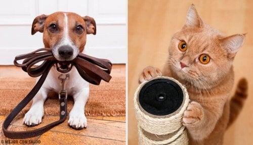 Hvilket kjæledyr er mest gunstig for helsen?