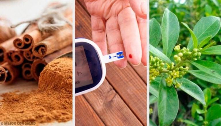 5 fantastiske medisinplanter for å regulere diabetes