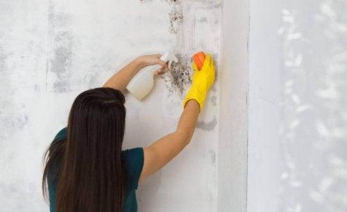 Slik fjerner du mugg fra hjemmet på en naturlig måte