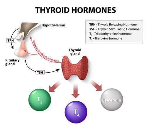 Behandling av hypotyreose